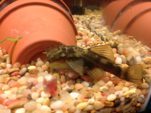 Sub Adult Male Green Dragon Photo_zps3be79d2c