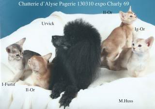 Les 4 chatons de janvier 2013 130310expoCharly2-red_zps07068ebe