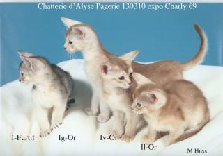 Les 4 chatons de janvier 2013 130310expoCharly3-red_zpsdfd7ea3e