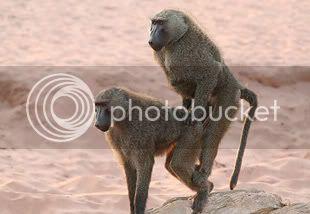 Majmuni 025200717