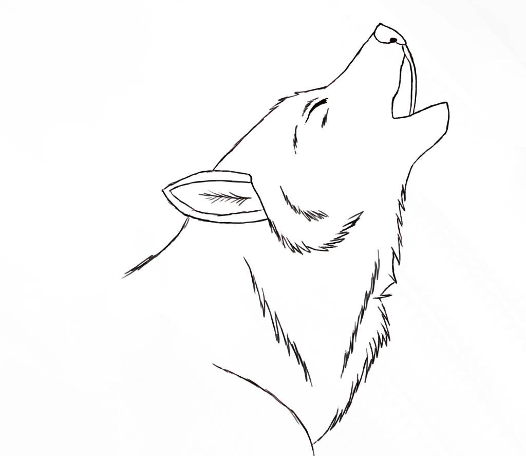 Any artist here? Wolf-sketch