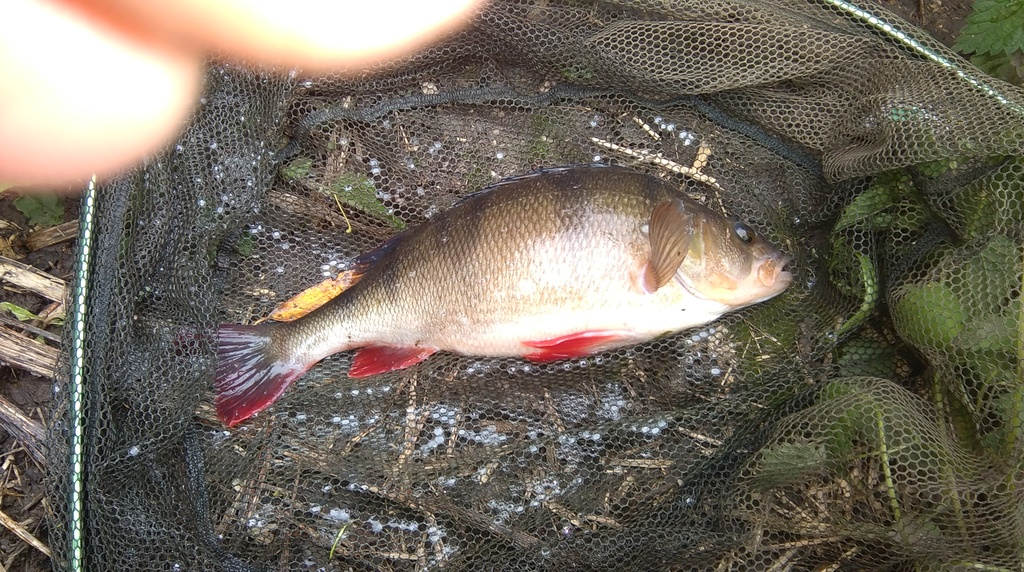 my day on the river blythe IMAG0148_zpspkm8oqr3