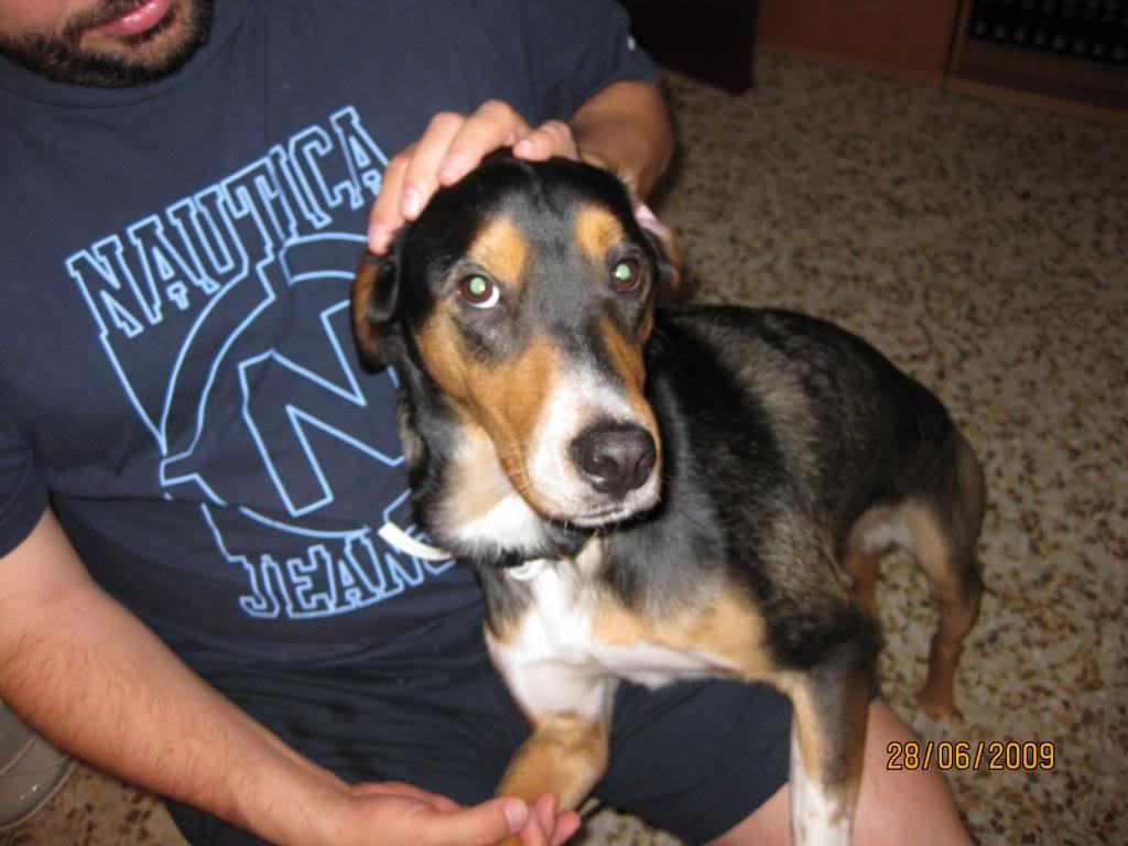 Animalines en casa IMG_0178_zps44dd3122