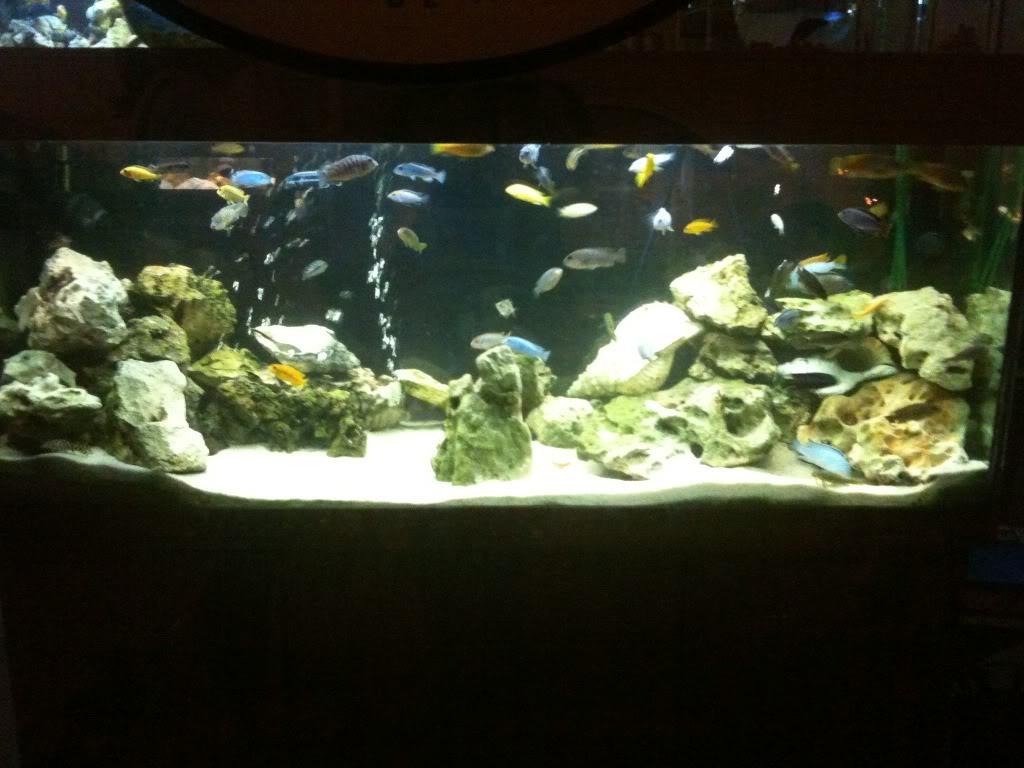 algunos de mis acuarios montados IMG_2273