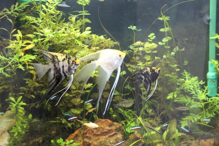 7º Concurso AquaPeixes de Fotografias -Tema Peixes Cardumeiros e Peixes em Grupo- - Página 2 IMG_6610_zpsc1732814