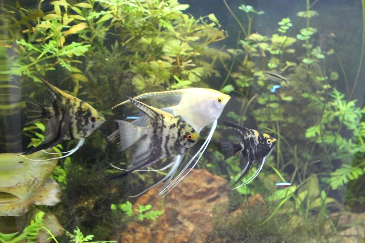 7º Concurso AquaPeixes de Fotografias -Tema Peixes Cardumeiros e Peixes em Grupo- - Página 2 IMG_6629_zps8fc69ba8