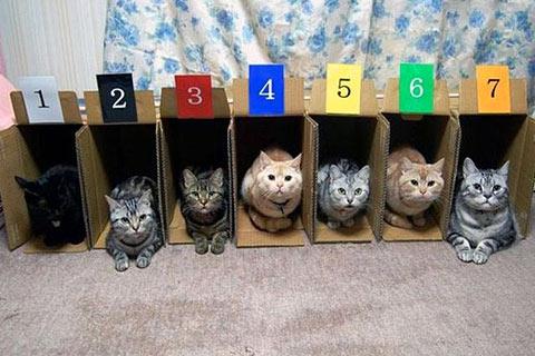 Кошки (Cats) - Page 5 Cb8