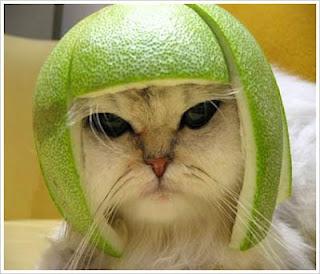 Para lamang po sa mga may MOTOR na walang Helmet...Libre to!!! PASOK! Funny-photos-01