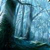 La forêt d'Orphée