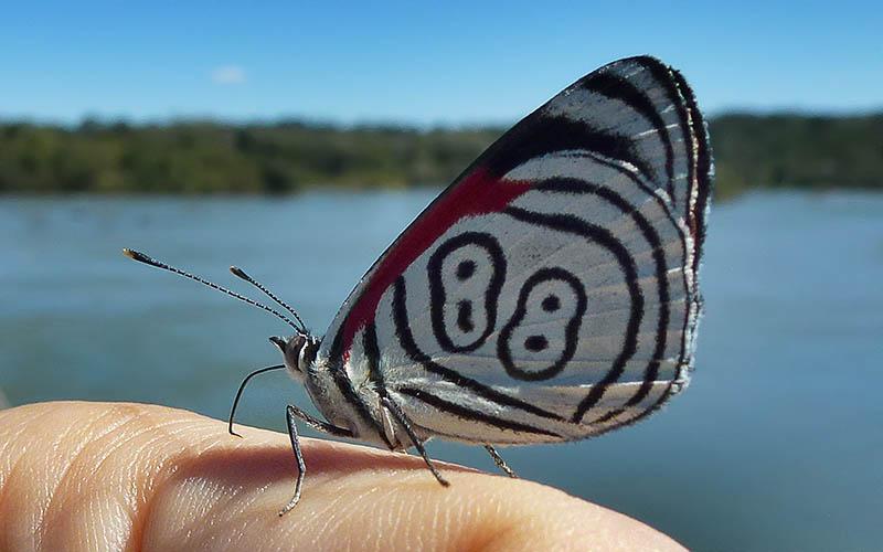 macro instantaneo Mariposa2