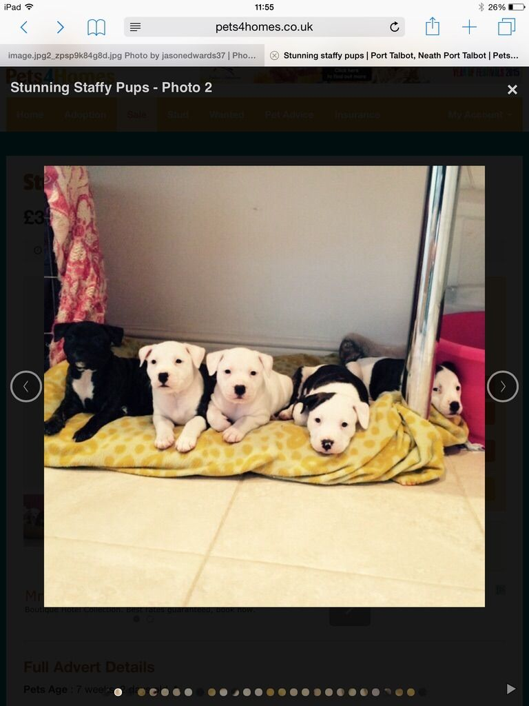 Marley with his brothers and sisters Image.jpg1_zpsmidt8dpd