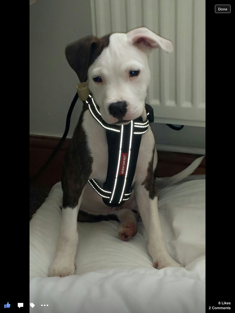 Marley in his new harness  Image.jpg1_zpsn8h1o9it