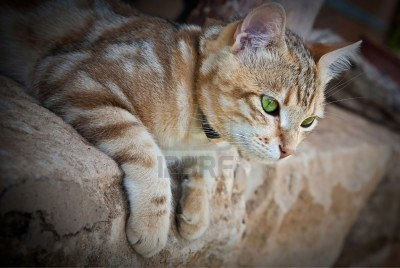 ThunderClan cats 6866762-a-beautufil-ginger-cat-with-green-eyes-close-up-lying-on-a-sandstone-porch