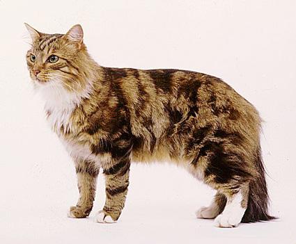 ThunderClan cats 954495