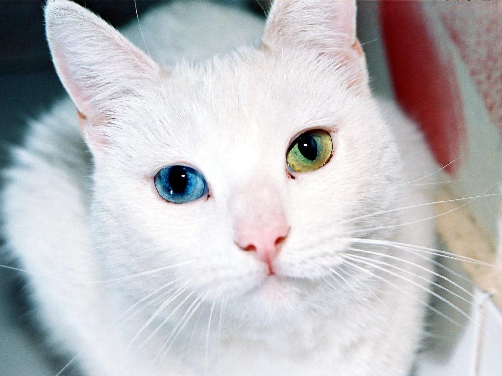 ThunderClan cats Cat_Eyes