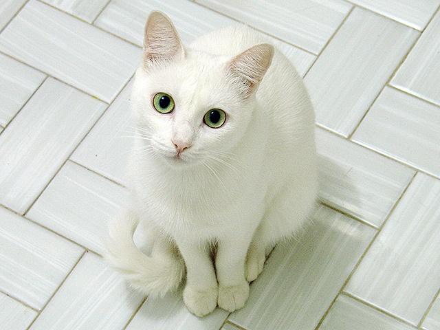 ThunderClan cats Mintfrost