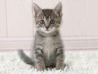 ThunderClan cats Sidebox-Kitten-Thinks-R