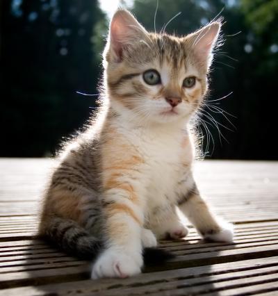 ThunderClan cats Cute-kittens1