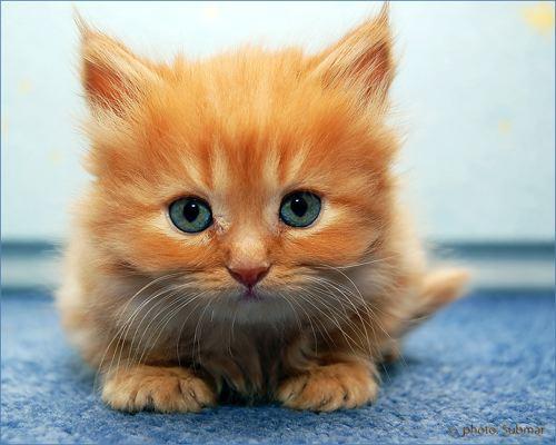 ThunderClan cats Kitty-kittens-31922153-500-400