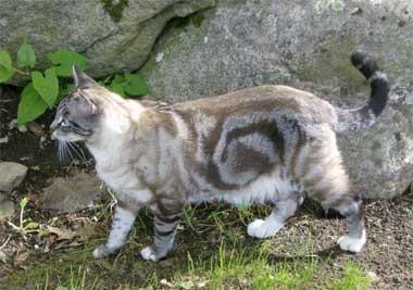 ThunderClan cats Whirlpaw