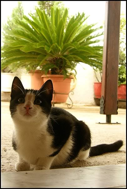 Ιστορίες της αυλής.. ( ή αλλιώς: ιστορίες με γάτες ) DSCN7836