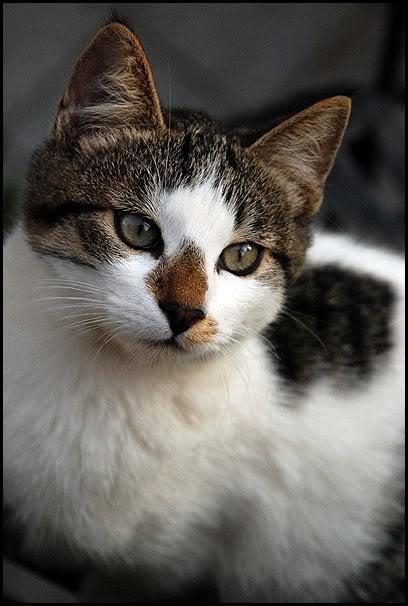 Ιστορίες της αυλής.. ( ή αλλιώς: ιστορίες με γάτες ) DSC_0004