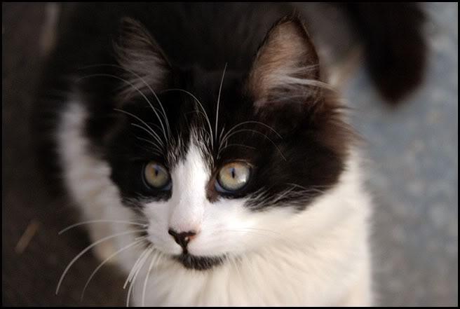 Ιστορίες της αυλής.. ( ή αλλιώς: ιστορίες με γάτες ) DSC_0008