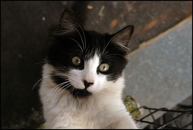Ιστορίες της αυλής.. ( ή αλλιώς: ιστορίες με γάτες ) DSC_0015