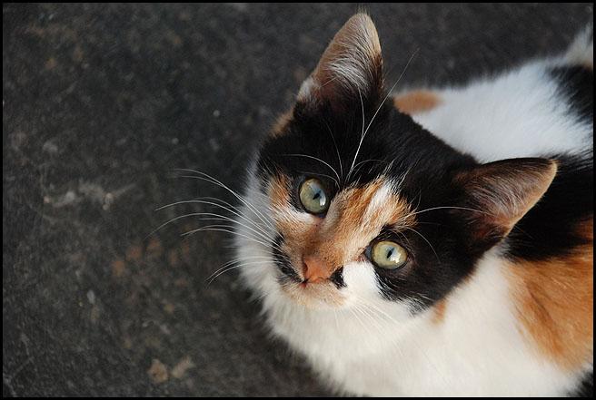 Ιστορίες της αυλής.. ( ή αλλιώς: ιστορίες με γάτες ) DSC_0018