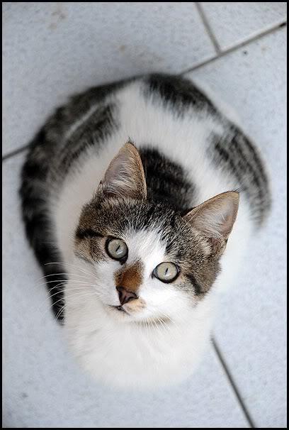 Ιστορίες της αυλής.. ( ή αλλιώς: ιστορίες με γάτες ) DSC_0024