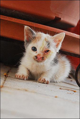 Η Κυβέλη σπίτι θέλει... / Χαρίζεται υπέροχο μωράκι.. *Υιοθετήθηκε* DSC_0384_zps24770ee7