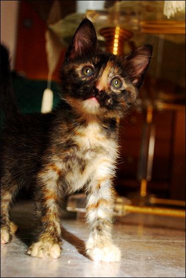 *ΥΙΟΘΕΤΗΘΗΚΕ* Η Cadi (από το Cadillac) - το συντροφικό κοριτσάκι... (Road Runner kitty) DSC_0713_zpseafb7d99