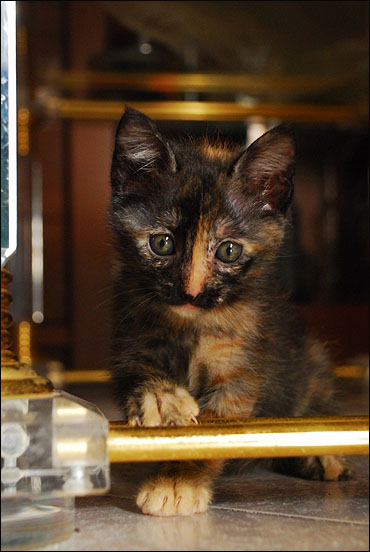 *ΥΙΟΘΕΤΗΘΗΚΕ* Η Cadi (από το Cadillac) - το συντροφικό κοριτσάκι... (Road Runner kitty) DSC_0747_zpsae62176d