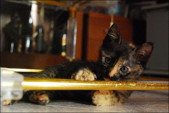 *ΥΙΟΘΕΤΗΘΗΚΕ* Η Cadi (από το Cadillac) - το συντροφικό κοριτσάκι... (Road Runner kitty) DSC_0778_zps9d3fd006