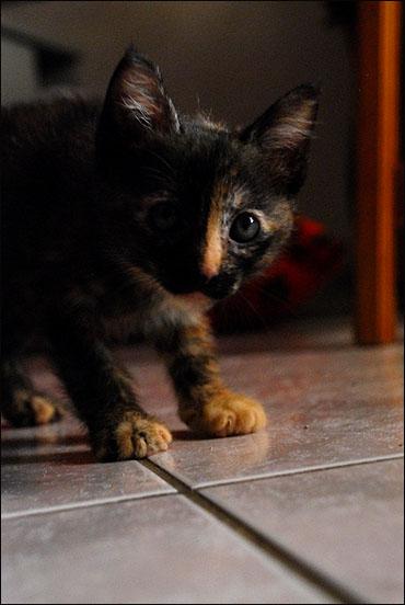 *ΥΙΟΘΕΤΗΘΗΚΕ* Η Cadi (από το Cadillac) - το συντροφικό κοριτσάκι... (Road Runner kitty) DSC_0787_zpsa81fd6c0