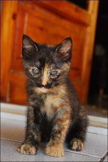 *ΥΙΟΘΕΤΗΘΗΚΕ* Η Cadi (από το Cadillac) - το συντροφικό κοριτσάκι... (Road Runner kitty) DSC_0809_zpsb98636e5