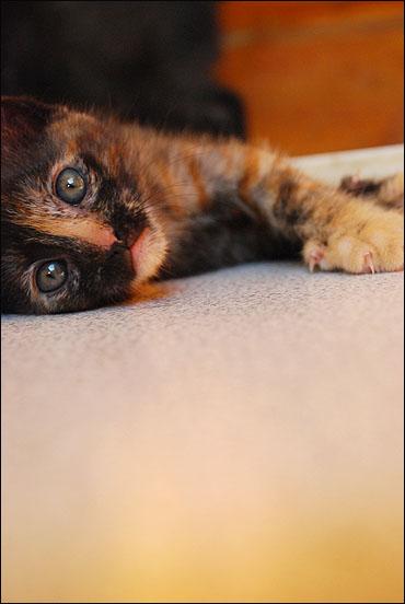 *ΥΙΟΘΕΤΗΘΗΚΕ* Η Cadi (από το Cadillac) - το συντροφικό κοριτσάκι... (Road Runner kitty) DSC_0897_zpsa73470c9