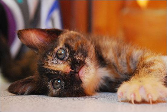 *ΥΙΟΘΕΤΗΘΗΚΕ* Η Cadi (από το Cadillac) - το συντροφικό κοριτσάκι... (Road Runner kitty) DSC_0900_zpsa4635d49