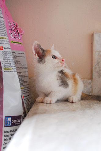 Η Κυβέλη σπίτι θέλει... / Χαρίζεται υπέροχο μωράκι.. *Υιοθετήθηκε* - Σελίδα 3 DSC_0943_zpsc0341168