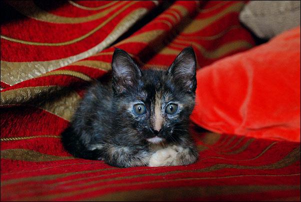 *ΥΙΟΘΕΤΗΘΗΚΕ* Η Cadi (από το Cadillac) - το συντροφικό κοριτσάκι... (Road Runner kitty) DSC_0951_zps56f79fc7