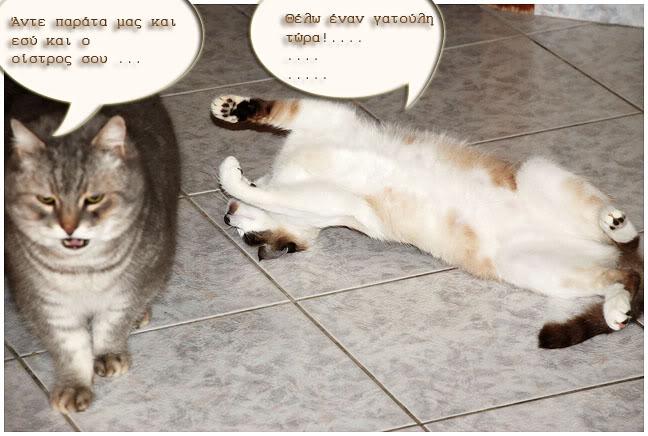 """Οι """"μαύρες"""" σκέψεις μιας γάτας... Μήπως η γάτα έχει κάτι να μας πει; DSC_1008"""