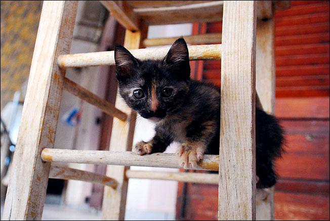 *ΥΙΟΘΕΤΗΘΗΚΕ* Η Cadi (από το Cadillac) - το συντροφικό κοριτσάκι... (Road Runner kitty) - Σελίδα 2 DSC_1048_zps05792420