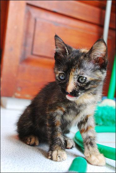 *ΥΙΟΘΕΤΗΘΗΚΕ* Η Cadi (από το Cadillac) - το συντροφικό κοριτσάκι... (Road Runner kitty) - Σελίδα 2 DSC_1078_zps4272ad57