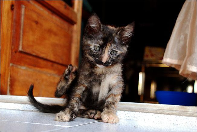 *ΥΙΟΘΕΤΗΘΗΚΕ* Η Cadi (από το Cadillac) - το συντροφικό κοριτσάκι... (Road Runner kitty) DSC_1238_zps67ff894b