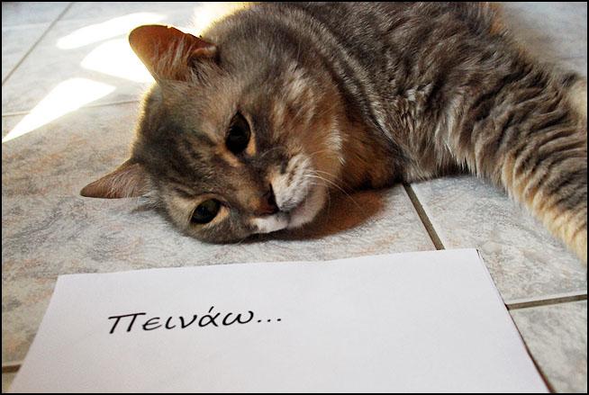 """Οι """"μαύρες"""" σκέψεις μιας γάτας... Μήπως η γάτα έχει κάτι να μας πει; DSC_1462"""