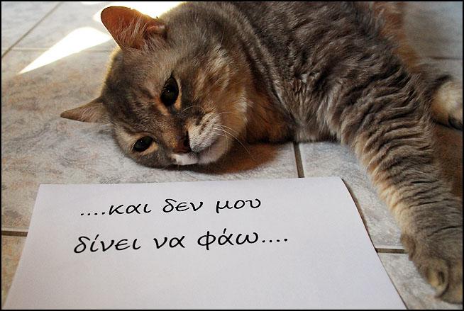 """Οι """"μαύρες"""" σκέψεις μιας γάτας... Μήπως η γάτα έχει κάτι να μας πει; DSC_1463"""