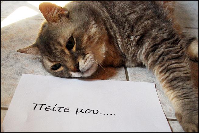 """Οι """"μαύρες"""" σκέψεις μιας γάτας... Μήπως η γάτα έχει κάτι να μας πει; DSC_1464"""