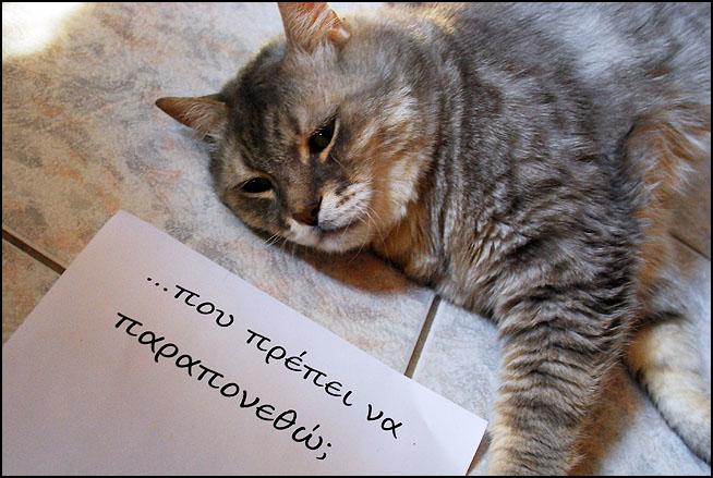 """Οι """"μαύρες"""" σκέψεις μιας γάτας... Μήπως η γάτα έχει κάτι να μας πει; DSC_1467"""
