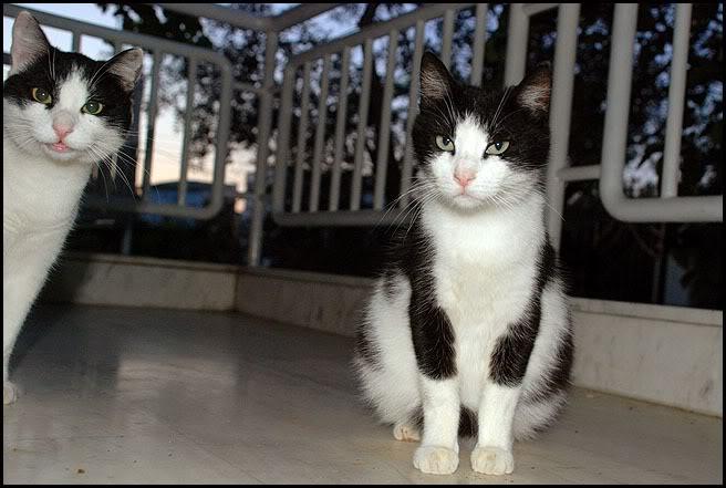 Ιστορίες της αυλής.. ( ή αλλιώς: ιστορίες με γάτες ) DSC_3362