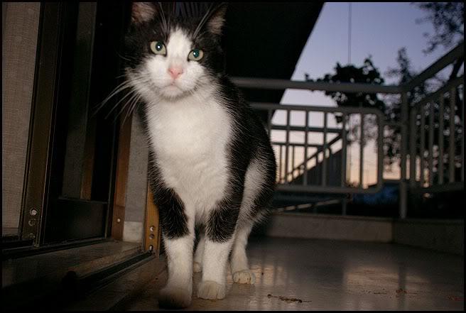 Ιστορίες της αυλής.. ( ή αλλιώς: ιστορίες με γάτες ) DSC_3364